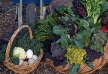 colourful vegetables in basket