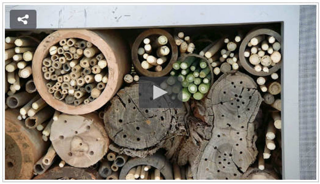 Bee Hotel Abc Gardening Sophies Patch Sophie Thomson