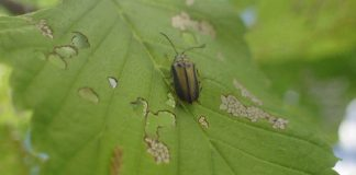 beetle on green leaf