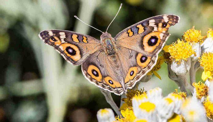 Habitat for butterflies – Sophies Patch – Sophie Thomson