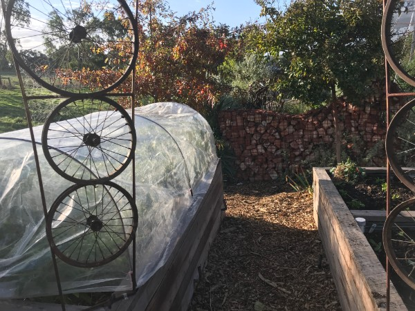 garden bed covered with plastic