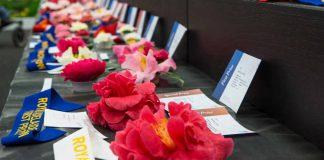 show camellias