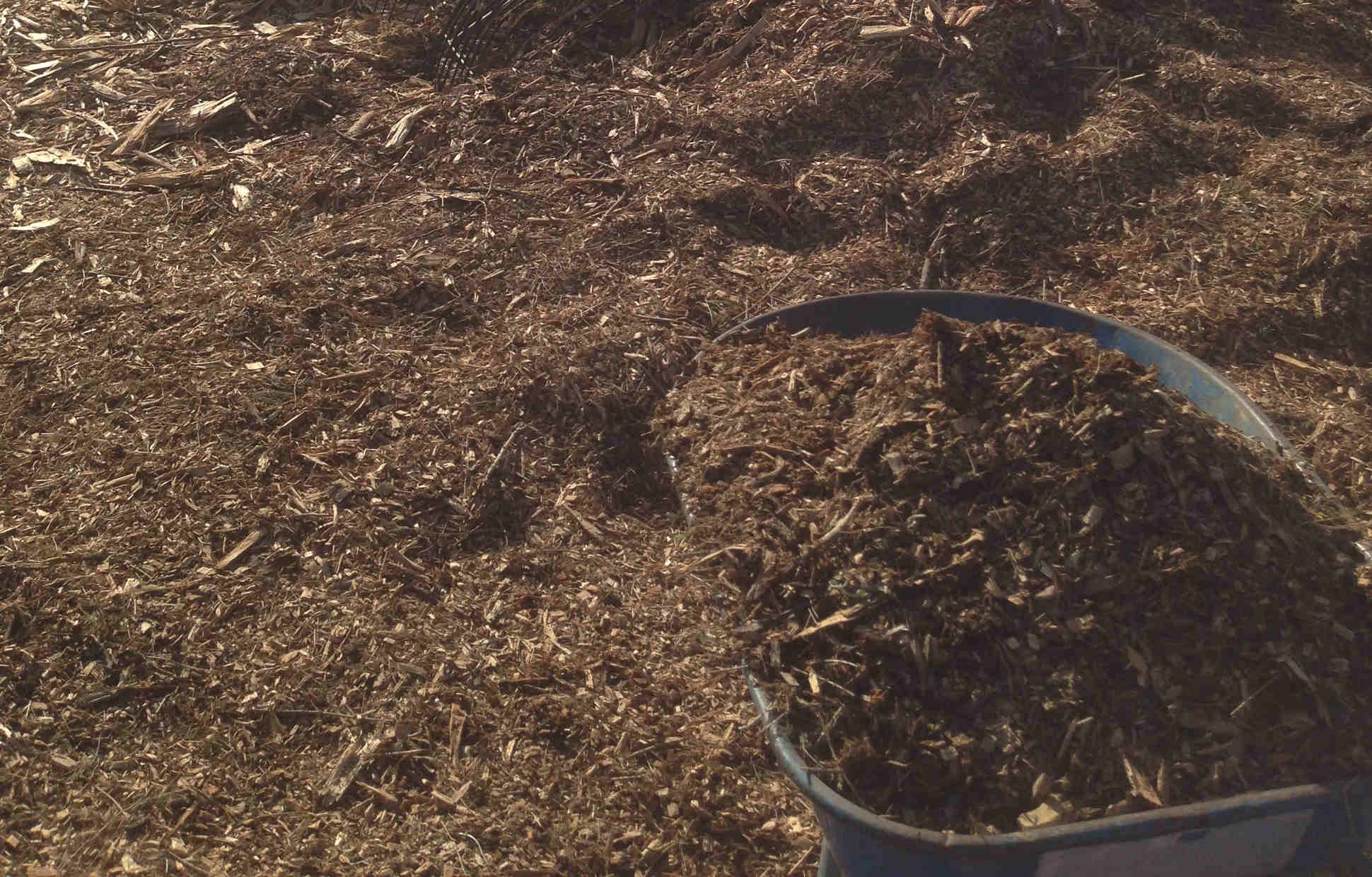 Mulch Why? What? Myths & Tips   Sophies Patch - Sophie Thomson