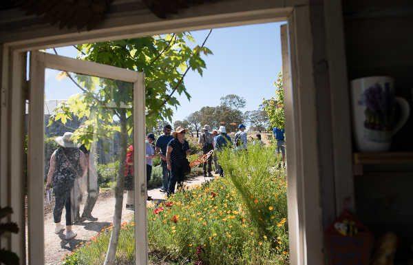 open garden photo