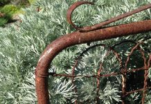 old rusty gate with grey foliage