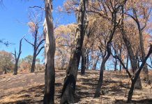 view of bushfire damage
