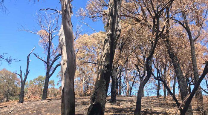 view of bushfire damage
