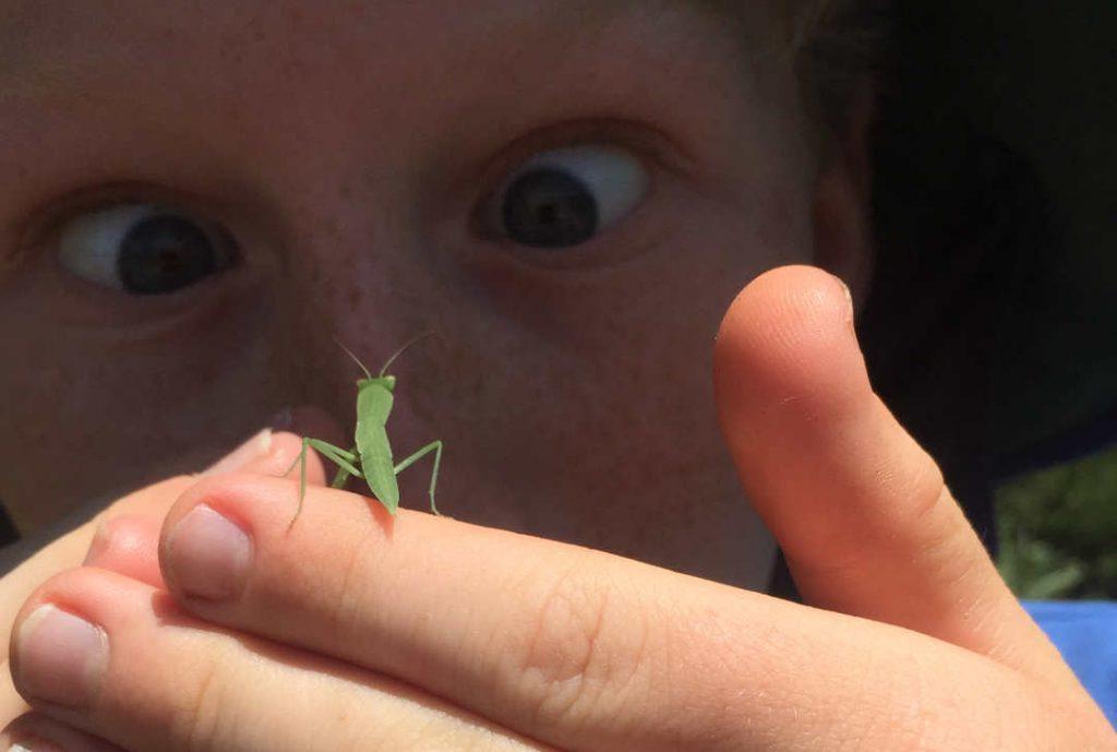 bug watching