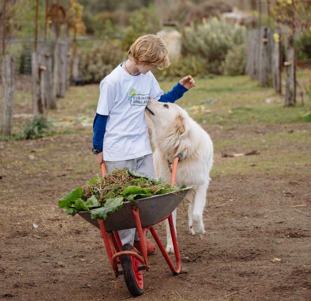 child, dog, wheelbarrow
