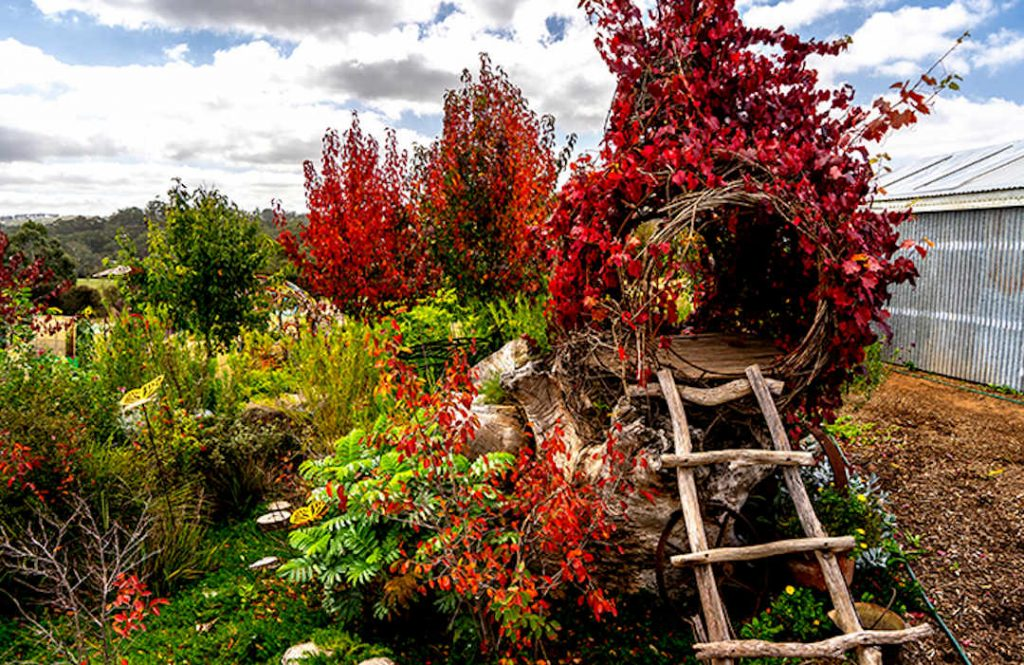 pear tree with tree house