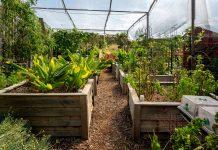 polyhouse garden