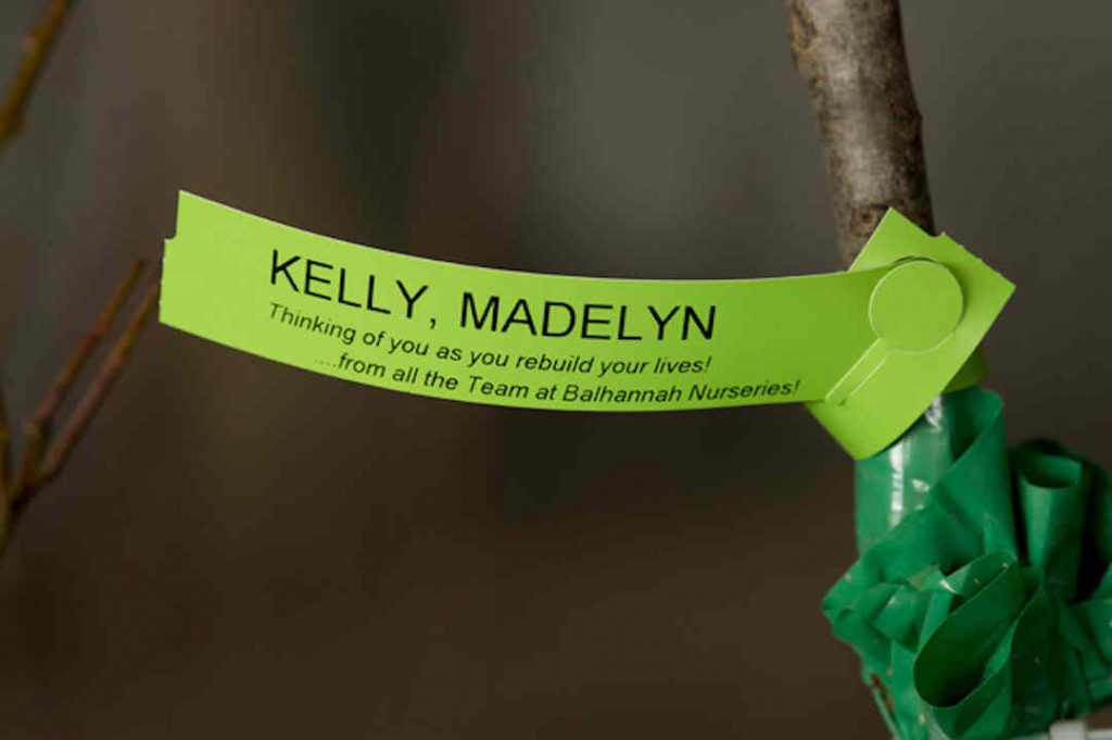 fruit tree label