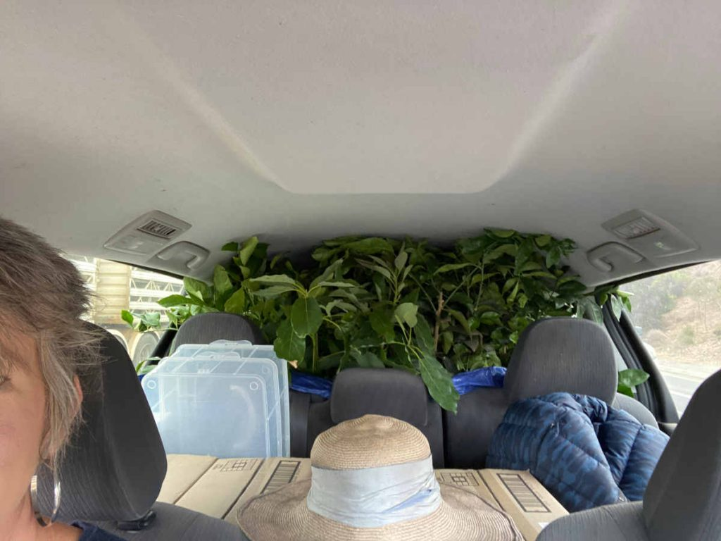 car with plants